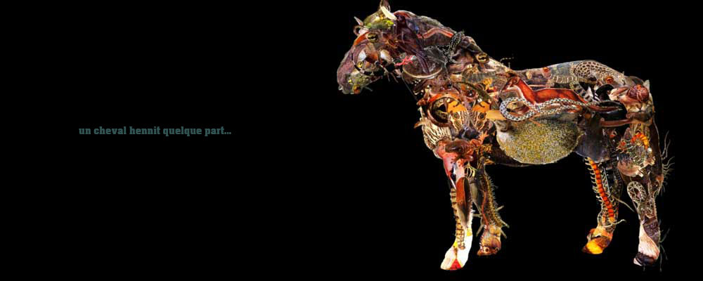 spectacle-cheval-b